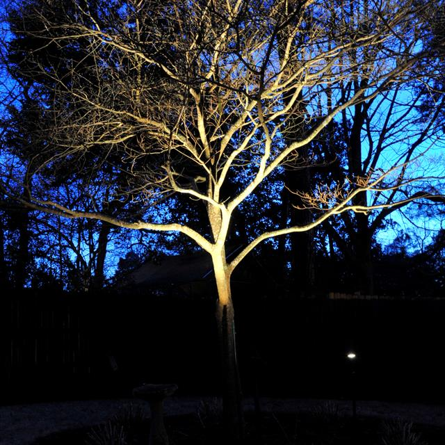 yard lighting iluminating tree in the night