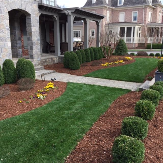 Grass and mulch with shaped bushes and flowers.