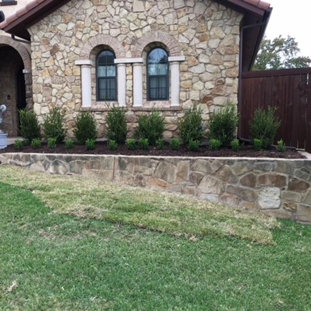 Shrub and plant landscapling lining stone house