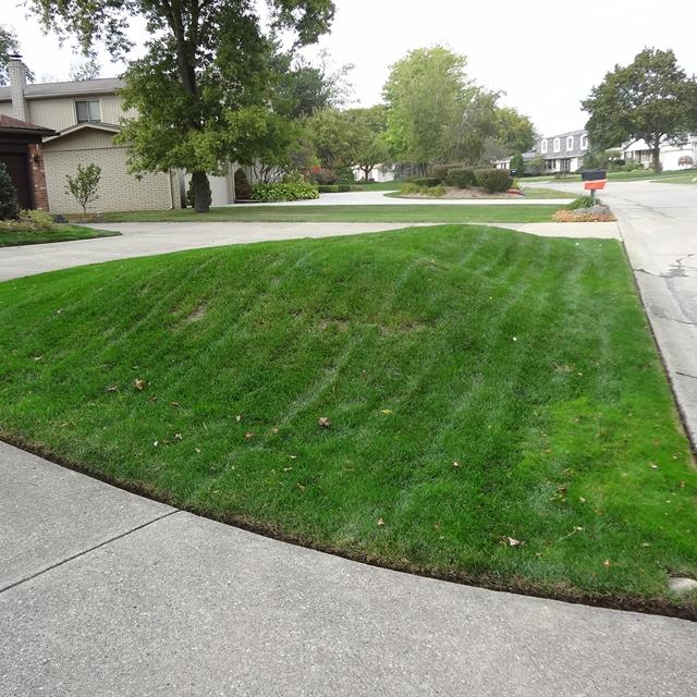 Well manicured lawn