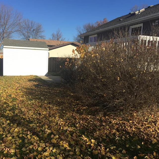 Disheveled back yard