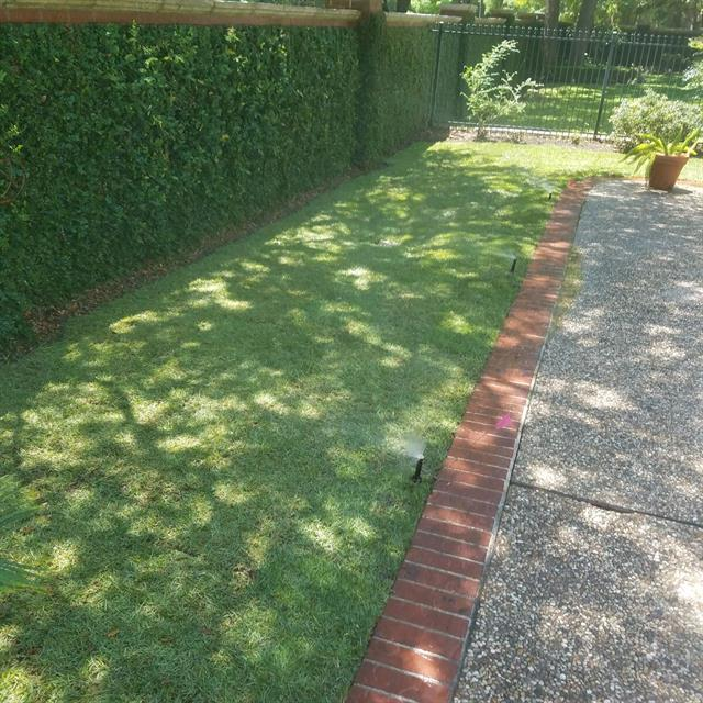 Grass and walkway