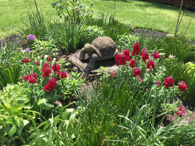 Flower bed and tortoise statue