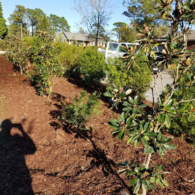 Freshley planted trees and shrubs