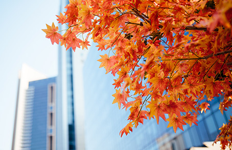 Fall leave in front of office buildings
