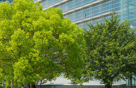 two large trees in front of glass commercial building